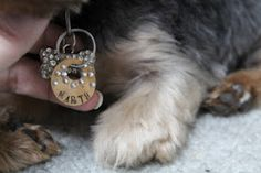 Beautiful dog collar tag by Ann Butler using ImpressArt's Jeanie letter stamps.
