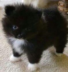 Look at this little fur ball! Hahaha