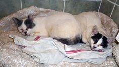 Plus de 80 chats maltraités à Rosny-sous-Bois : la Fondation partie civile - Fondation 30 Millions d'Amis