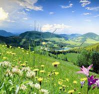 Foto (c) Berghofer alles blüht im Naturpark Almenland Golf Courses, Pictures, Seasons, Summer