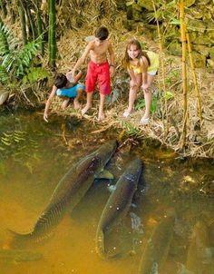 Big Fish!!