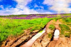 Field In Blossom After The Rain ...  agriculture, background, beautiful, beauty, bloom, blue, cloud, cloudscape, color, countryside, day, environment, farm, field, flower, foreground, freshness, grass, grassland, green, herb, horizon, horizontal, land, landscape, lit, meadow, nature, outdoors, plant, puddle, purple, rural, scene, scenic, sky, spring, summer, sun, sunlight, sunny, sunrise, tranquil, vibrant, view, violet, water, wildflower