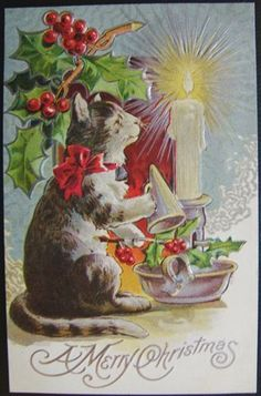 Look what I found on @eBay! http://r.ebay.com/6ZAkLD A Merry Christmas Cat Embossed Postcard Xmas Cats Series Holly Candle Vintage