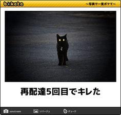 再配達5回目でキレた - 黒猫へのボケ[53135408] - ボケて(bokete)