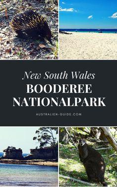 Ca. 210 km südlich von Sydney liegt der Booderee Nationalpark: eine absolute unentdeckte Naturperle. Traumstrände, faszinierende Landschaft und die australische Tierwelt hautnah! Ein Geheimtipp, schau dir an, was wir dort alles erlebt haben! Viel Spaß beim Lesen & Entdecken!