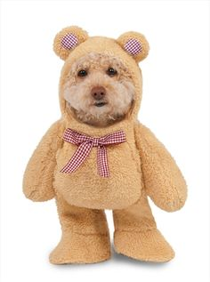 Just keep smiling with Walking Teddy Bear Dog Costume. An adorable fun theme is in store for you with Dog Costumes for Halloween at ToyHo. Best Dog Halloween Costumes, Halloween Party Kostüm, Pet Costumes, Costume Ideas, Halloween Halloween, Halloween Carnival, Funny Costumes, Teddy Bear Costume, Dog Lion Mane