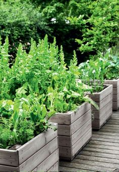 Herb and vegetable boxes made of larch wood. Vegetable Boxes, Interior Garden, Pergola, Survival, Herbs, Patio, Vegetables, Wood, Plants