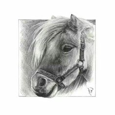 Day 16 of January sketch a day challenge. 'Brodie' Shetland pony. #equestrian #art #shetlandpony #cute #pencil #drawing