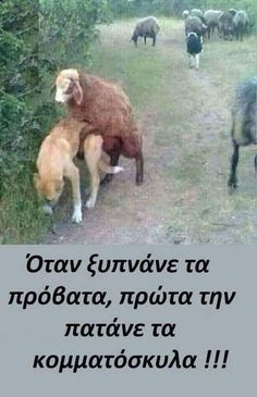 Jokes Pics, Funny Jokes, Hilarious, Horse Mate, Ancient Memes, Funny Greek, Greek Quotes, Just Kidding, Animals And Pets