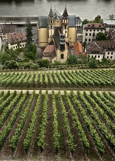 Germany Travel Inspiration - Wurzburg, Germany Vineyard
