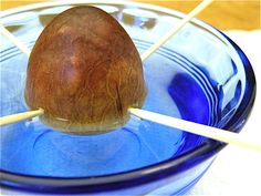 How to grow your own avocado tree from an avocado pit! (pretty cool experiment to see the tree sprout from the seed)