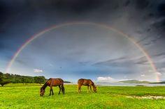 Rainbow | Horses Of the Rainbow - Gallery