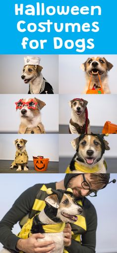 Don't leave you canine pal out of the Halloween festivities!