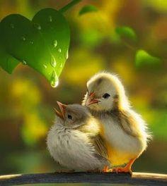 Bird Wallpaper, Images Wallpaper, Cute Birds, Pretty Birds, Beautiful Love, Animals Beautiful, Beautiful Pictures, Cute Baby Animals, Animals And Pets