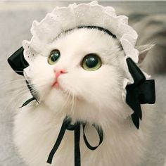 Looks like Aunt Pittypat from Gone With The Wind 😊 Cute Baby Cats, Baby Kittens, Cute Cats And Kittens, Cute Baby Animals, I Love Cats, Crazy Cats, Kittens Cutest, Funny Animals, Pretty Cats