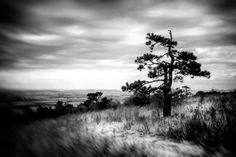 "Slovakia, Zobor, Nitra: Motion #PHOTOFRANO Photography & FineArt by photofrano  ""Exposure📸 is just the beginning""  #HDR #BW   #fb : fb.com/PHOTOFRANO  #blog : photofrano.wordpress.com  #portfolio : 500px.com/PHOTOFRANO Hdr, Wordpress, Fine Art, Celestial, Sunset, Landscape, Nature, Blog, Photography"