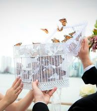 Butterfly release :) :) (You could do ladybugs if you prefer) hehe