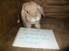 Bunny Shaming...who knew this was a thing? I hope my bunny doesn't want to go spelunking inside the couch! (Click through for more...so funny!)