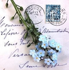 Forget Me Not flowers Forget Me Not Blue, Old Letters, Lettering, Mail Art, Blue Flowers, Flower Arrangements, Beautiful Flowers, Decoupage, Creations