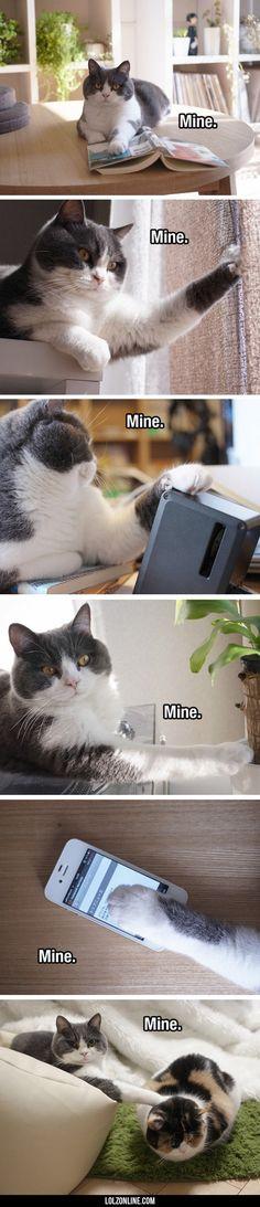 It Belongs To Kitty#funny #lol #lolzonline