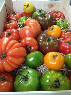 """""""Heritage tomatoes"""" - we've had lots of them this summer, and they've been full of flavour."""