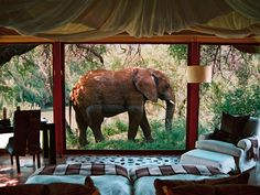 Check in to one of these hotels where wild animals roam free, and you could be sharing your breakfast table with giraffes, lounging poolside with elephants, or peering out from your hotel room window at a rookery of penguins.