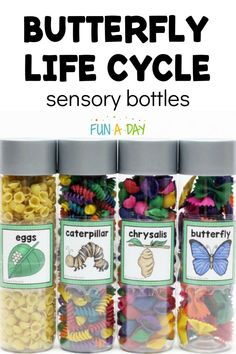 How to Make Butterfly Life Cycle Sensory Bottles for Preschool