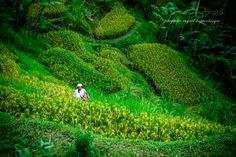 Photo green by Ingrid Kappenberger on 500px
