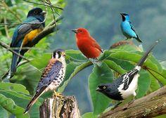 Aves multicoloridas. http://www.portalanaroca.com.br/qual-vc-mais-gostou/