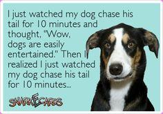 "I just watched my dog chase his tail for 10 minutes and thought, ""Wow, dogs are easily entertained."" Then I realized I just watched my dog chase his tail for 10 minutes… 