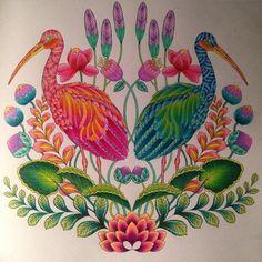 """#coloringforadults #adultcoloring #prismacolor #tropicalwonderland…"