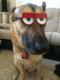 Dog wearing the eyes from new happy meal.Lol