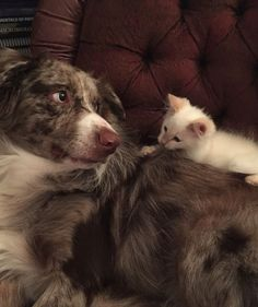 12 Big Brother Dogs and Their Kittens