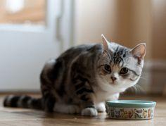 고양이 간식 레시피-  닭가슴살 브로콜리 스튜 만들기