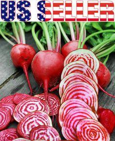 50 Organically Grown Chioggia Beet Seeds Candy Stripe Heirloom Non GMO Italian | eBay