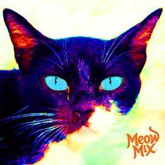 25 best cat pop art images on pinterest art pop pop art and baby cats