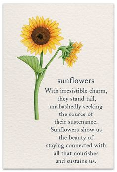 20 Inspirational Flower Quotes - Cute Flower Sayings About Life and Love Words Quotes, Life Quotes, Sayings, Quotes Quotes, Qoutes, Sunflower Quotes, Sunflower Facts, Meaning Of Sunflower, Sunflower Tattoos