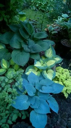 shade garden with hostas - Gartengestaltung - Tropical Garden, Plants, Woodland Garden, Shade Garden, Lawn And Garden, Ferns Garden, Dream Garden, Garden Landscaping, Beautiful Gardens