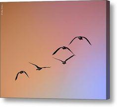 Pelicans Canvas Print / Canvas Art By Alexander Fedin