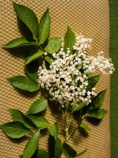 Healing Herbs, Plants, Diy, Magick, Bricolage, Do It Yourself, Plant, Medicinal Plants, Homemade