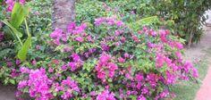 Quels arbustes fleurissent en été ?