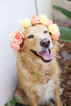 How to make your own flower headpiece or necklace for a fury friend
