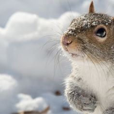 Dear God, I want to thank you for this life you have given me.  Love, Squirrel