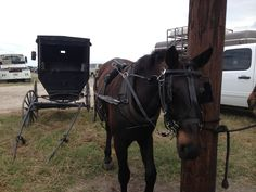 Buggy for sale at Beeville Amish auction. Amish Culture, To Go, Auction, Horses, Bee, Simple, Photos, Horse, Bees