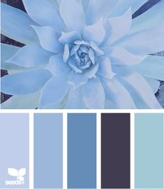 New apartment color schemes blue design seeds Ideas Design Seeds, Blue Color Schemes, Colour Pallette, Color Combos, Apartment Color Schemes, Apartment Design, Cactus E Suculentas, Color Swatches, Blue Design
