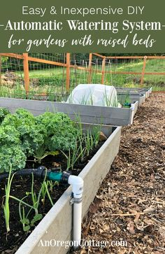 We are LOVING this easy DIY automatic garden watering system for our raised vegetable beds! It didn't cost a lot (especially compared to full irrigation systems), used easy to find Pvc pipe parts, bas Watering Raised Garden Beds, Raised Garden Beds Irrigation, Raised Bed Garden Layout, Garden Watering System, Garden Irrigation System, Irrigation Systems, Drip Irrigation, Raised Vegetable Gardens, Vegetable Garden Design