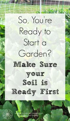 In order to have a healthy garden you need healthy soil. Find steps here. Gardening For Beginners, Gardening Tips, Starting A Garden, Organic Gardening, Vegetable Gardening, Organic Fertilizer, Garden Care, Grow Your Own Food, Potting Soil