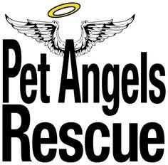 Pet Angels Rescue Petangelsrescue0661 Profile Pinterest