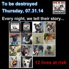 12 beautiful dogs need out help to give them a future. Please share everywhere! To rescue a Death Row Dog, Please read this: http://urgentpetsondeathrow.org/must-read/    To view the full album, please click here:    https://www.facebook.com/media/set/?set=a.611290788883804.1073741851.152876678058553&type=3