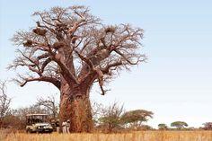 See the majestic baobabs at Singita Pamushana Lodge